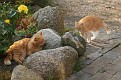 Hesselager Cats (22)