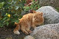 Hesselager Cats (24)