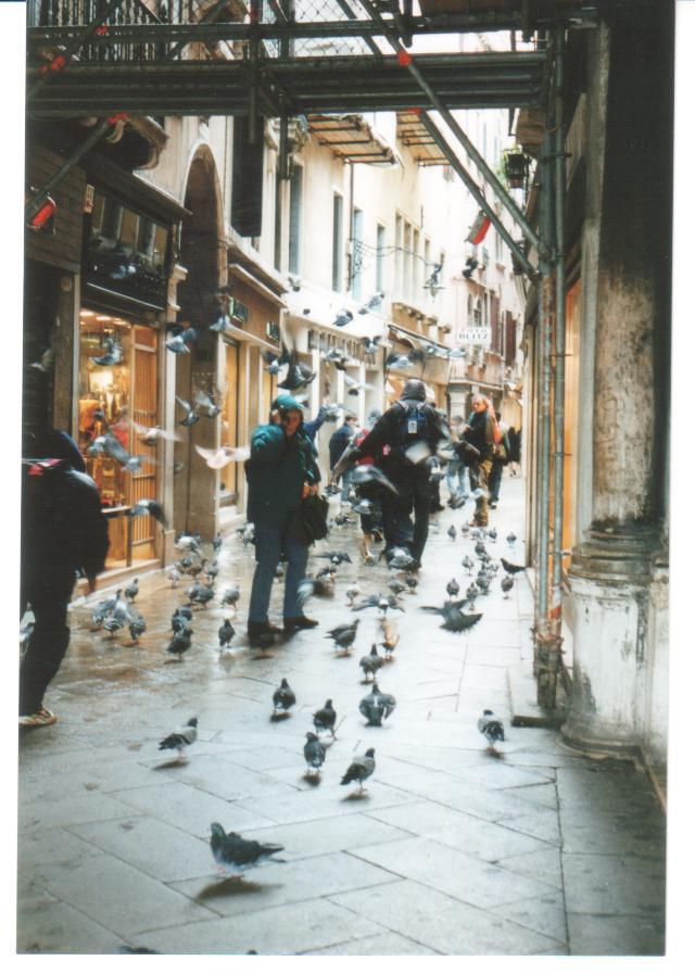 Pigeons, pigeons everywhere