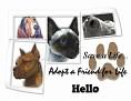 dcd-Hello-Adopt a Friend.jpg