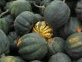 Acorn Squashes and a Sweet Dumpling Squash