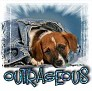 1Outrageous-blujeanpup