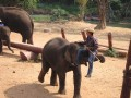 Mae Ping Elephant Camp near Chiang Mai in Northern Thailand Day 12 Feb 23-2006 (89)
