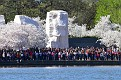 CherryBlossomFest APR2015 657