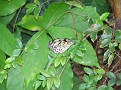 Butterfly World Butterflies Close Up20