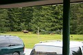 Moose from the front porch of Gustavus Inn
