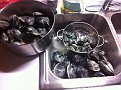 Cleaning and Sorting Clams into 3 Sizes.  Steamers, raw on 1/2 shell size and chowder clams :-)