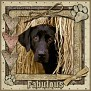 dcd-Fabulous-In The Hay