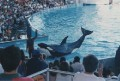 Sea World 031