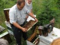 This one is a VIDEO!!!  Jersey Cape Beekeepers Meeting for Aug 09  (77)
