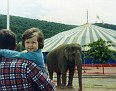 I get a ride from my dad, while an elephant just kinda stands there