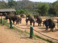 Mae Ping Elephant Camp near Chiang Mai in Northern Thailand Day 12 Feb 23-2006 (82)