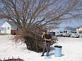 Pruning the Swamp Maple Tree in the Rear of my Home/Office March 22nd, 2007