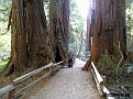 Muir Woods National Monument.