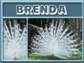 brenda-gailz0304-albino peacock.jpg