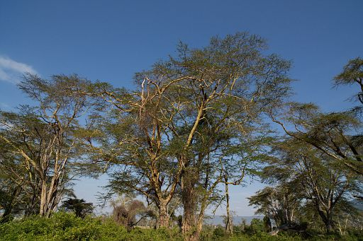 Tanzania 050.jpg