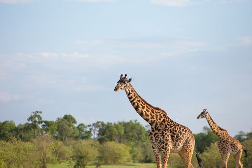 Tanzania 342.jpg