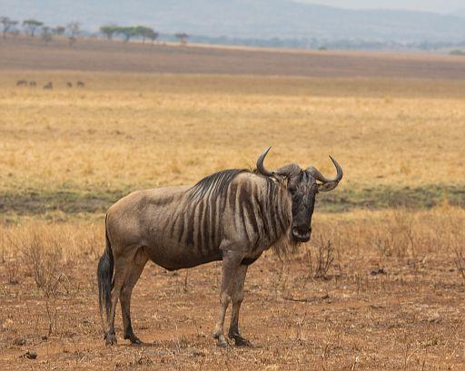 Tanzania 1 585.jpg