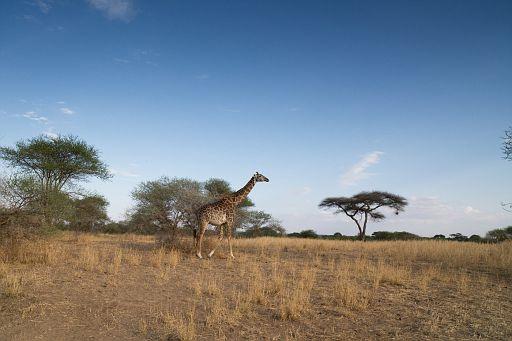 Tanzania 1 708.jpg