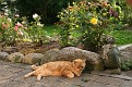 Hesselager Cats (3)