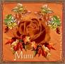 fallrose-mum