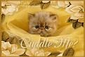 unhappy-cuddleme