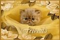 unhappy-friends