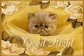 unhappy-goodnight