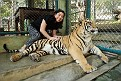023) Cindy with adult tiger