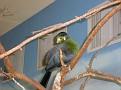 2007 Toledo Zoo 042