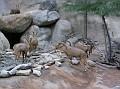 LA Zoo 066