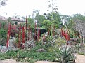 Arid Garden Red and Amber Reeds01