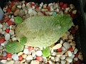 Pseudolithos caput-viperae