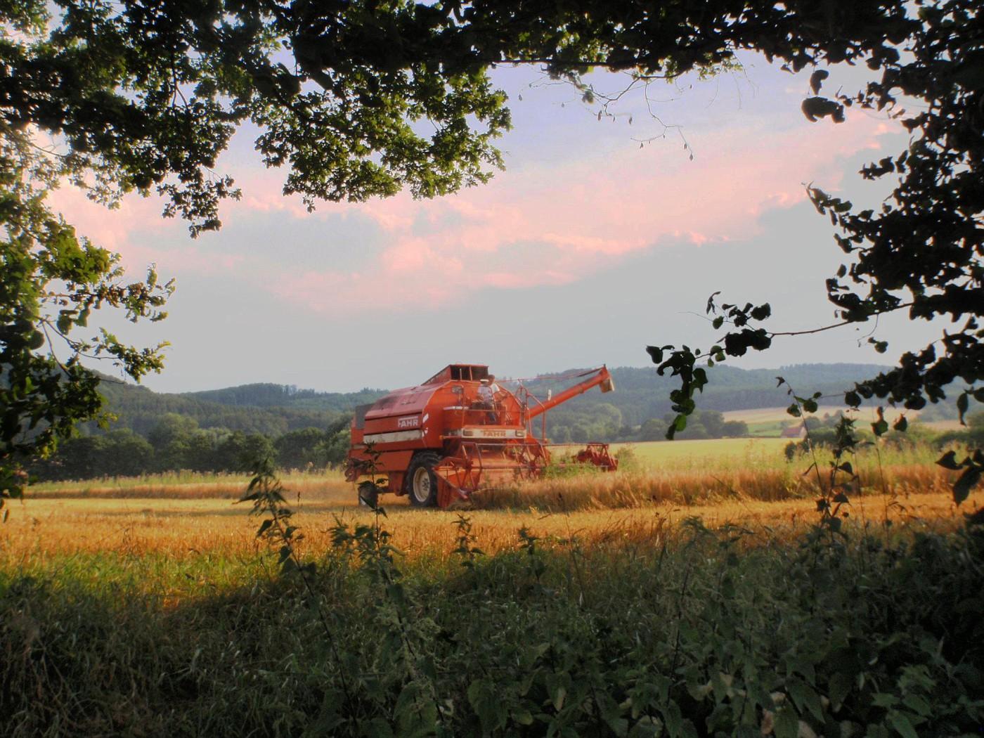 Die Getreideernte hat begonnen.