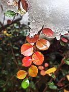 Schwitzender Schnee