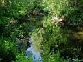 Urwald der Werre