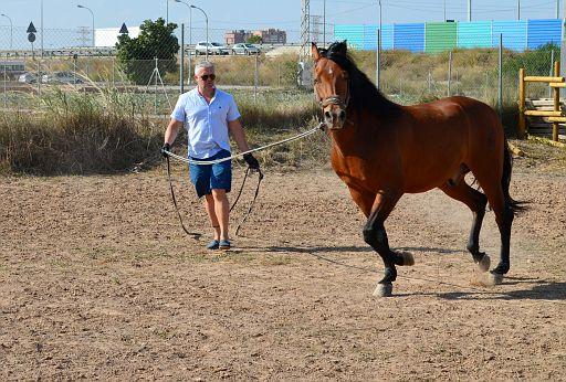 Ramon's horses