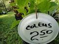 Plants Names DX7 197