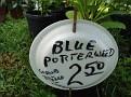Plants Names DX7 199