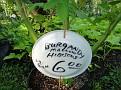 Plants Names DX7 233