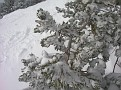 Snowey tree on the side of some trail