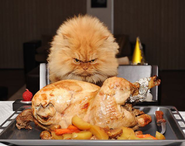 Are you sure that is your chicken? :)