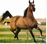 ANITAA #147555 (*Bask++ x Aethena, by The Real McCoy) 1976 bay mare bred by Lasma