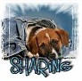 1Sharing-blujeanpup