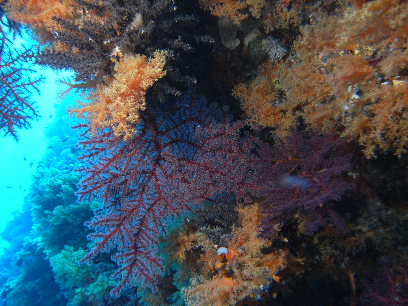 Soft Coral in Cave