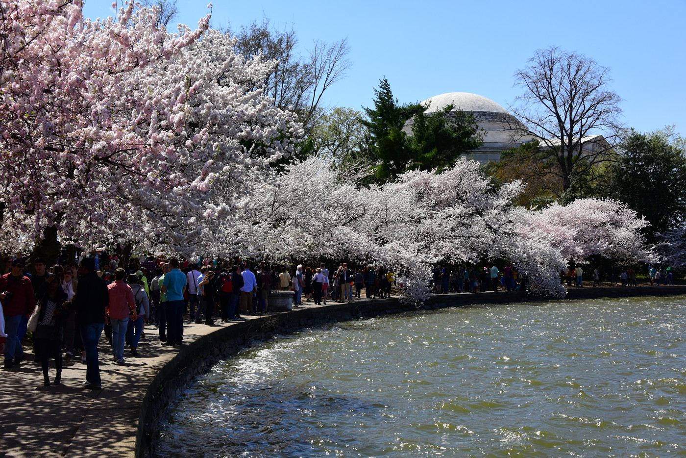 CherryBlossomFest APR2015 473