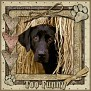 dcd-Too Funny-In The Hay